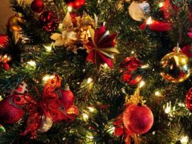 В канун празднования Нового Года вновь становится актуальным вопрос о самостоятельной заготовке гражданами ёлок для проведения праздничных мероприятий.