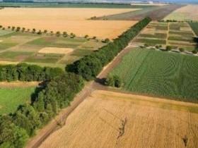 Особенности совершения сделок с земельными участками из земель сельскохозяйственного назначения